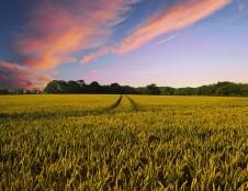 Dirbtinio intelekto paieškos žemės ūkiui