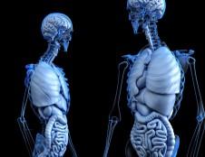 Programinės įrangos sprendimai medicininei vizualizacijai ir animacijai