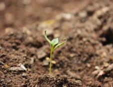 Airiai ieško dirvožemio tyrėjų Lietuvoje