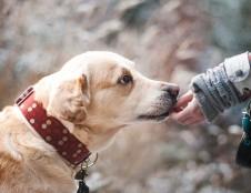 Alus šunims, vegetariški užkandžiai gyvūnams – inovacijos aptinkamos ir Lietuvoje