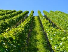 Rumunai ieško programinės įrangos žemės ūkiui kūrėjų