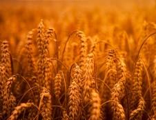 Britai ieško inovatyvių dozavimo sistemų žemės ūkiui