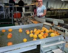 Austrai ieško automatizuotų atskyrimo sistemų