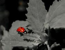"""Rugsėjį bus skelbiamas """"Biodiversa"""" paraiškų konkursas"""