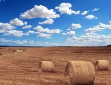 Rumunai ieško žemės ūkio technikos ir įrangos gamintojų