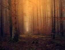Valstybės kino metraštyje – apie šalies miškus ir gamtosaugą iš pirmų lūpų