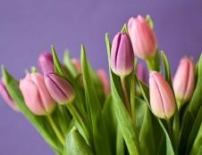 Karantino pažeidimai – prekyba gėlėmis, grožio paslaugų teikimas