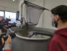 KMTP ir KU tęsia akvakultūros eksperimentus: užauginta 3-oji krevečių vada
